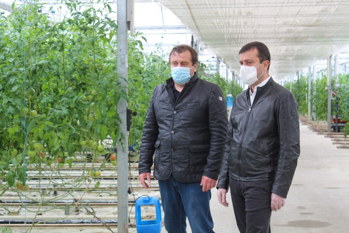 Tomato greenhouse in Berbuki continues to operate smoothly