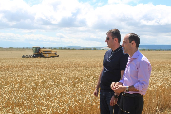 The process of taking grain crop  started in Shida Kartli