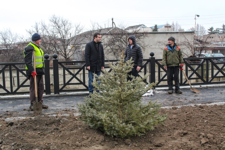 Planting Works are Going On in Gogebashvili Street