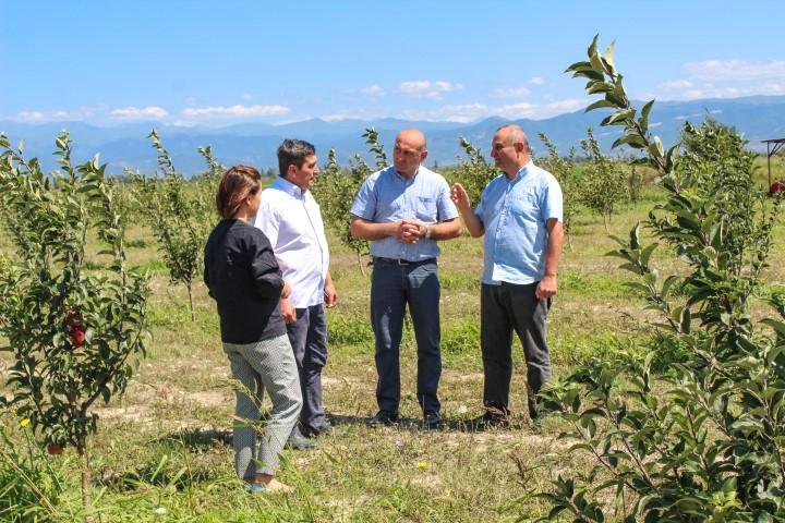 შიდა ქართლის რეგიონში ვაშლის ახალი ბაღი გაშენდა