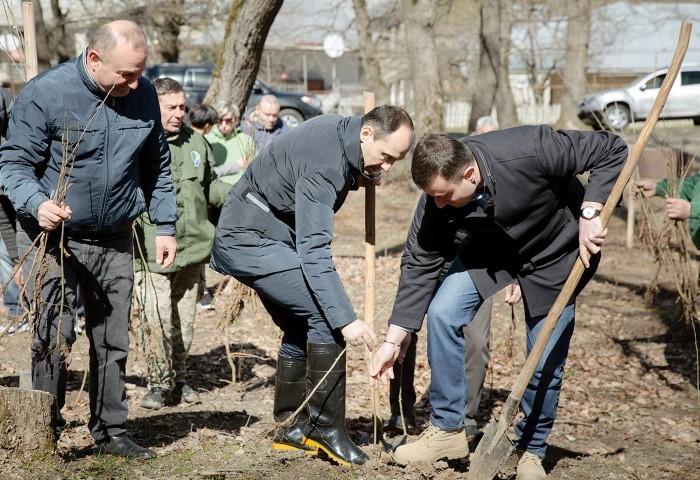 დაბა სურამში ტყის აღდგენის პროექტი დაიწყო
