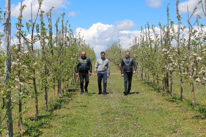 Agricultural works are being actively carried out in Shida Kartli