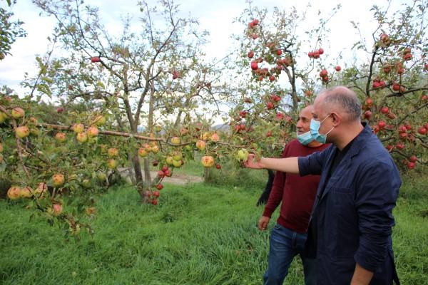 სეტყვისგან დაზარალებული ხოვლელი ფერმერები ხილის გადამამუშავებელ საწამოებში ვაშლის ჩაბარებას დღეიდანვე შეძლებენ