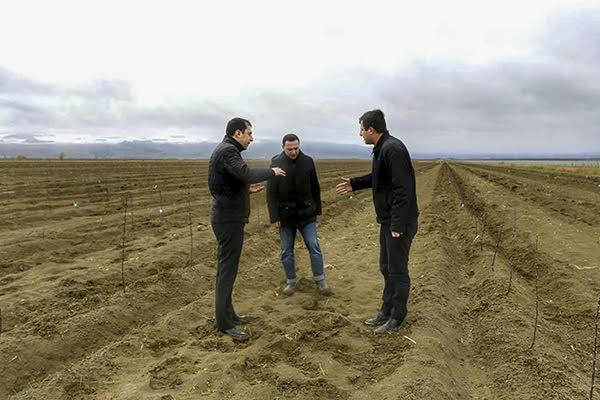 The New Orchards will be planted along the Demarcation Line