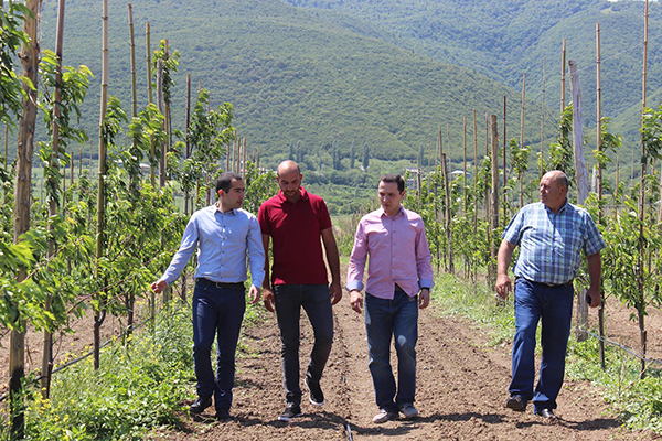 New orchard planted in Shida Kartli within the framework of the United Agroproject